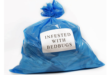 Dry cleaners guide bed bug infestation for Dry cleaning kill bed bugs